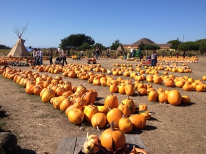 Just a few pumpkins