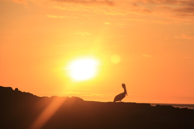 Sunset in the Galapagos last year