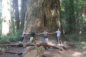 Some of the trees are enormous. This one is thought to be 325' tall.