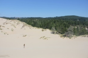 Sand dunes abutting conifer forests