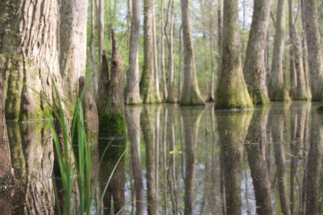 IMG_0434 swamp in sunlight