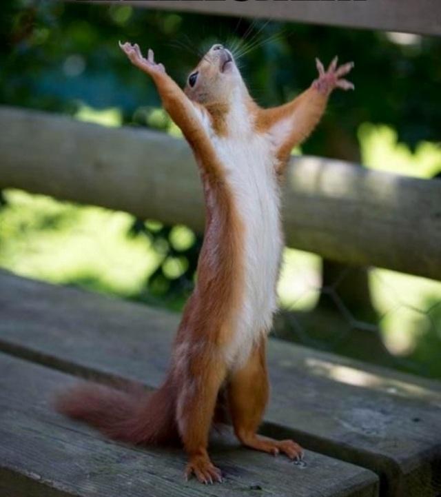 Hallelujah squirrel