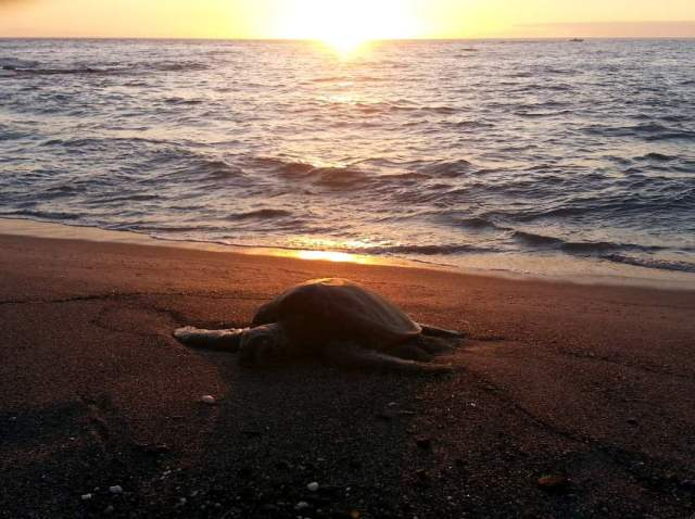 20150704_190141 turtle sunset