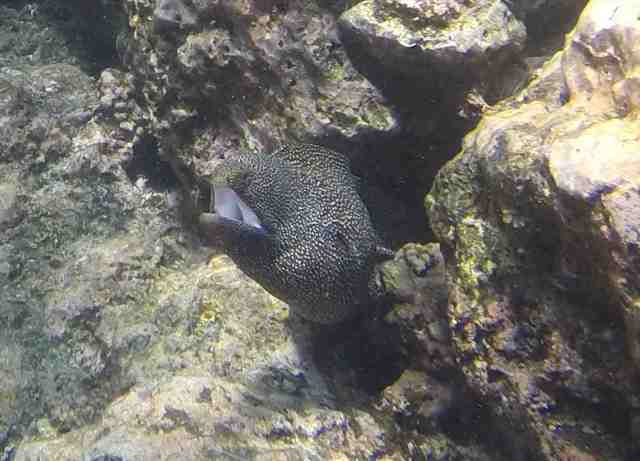 Don't get too close to moray eels
