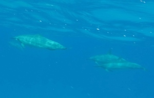 Just a couple of the dolphins we saw