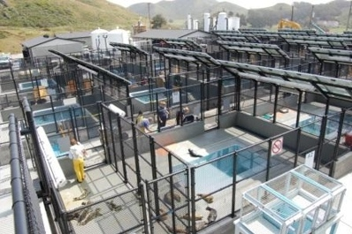 The hospital pools at the Marine Mammal Centre