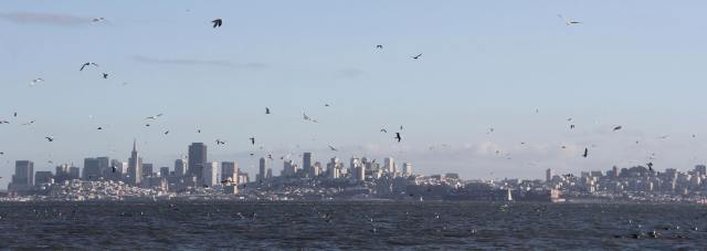 Gulls filled the skyline