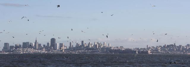 Gulls filled the skyline